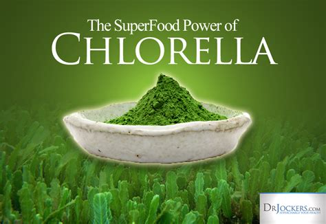 How Should I Detox With Chlorella Algeee by 7 Health Benefits Of Chlorella Drjockers
