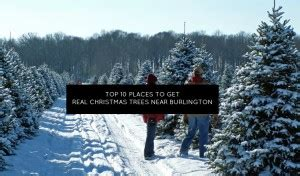 top 10 places near burlington to get a real christmas tree