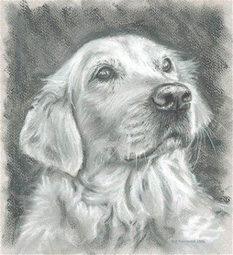 drawings of golden retrievers 17 best images about golden retriever on watercolors puppys and