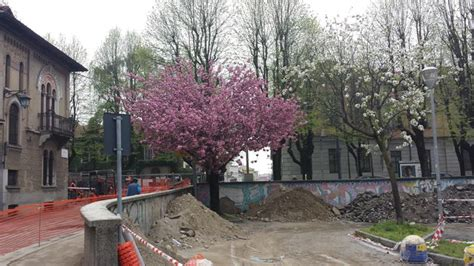 l albero a cui tendevi l albero a cui tendevi la pargoletta mano itrevigliesi