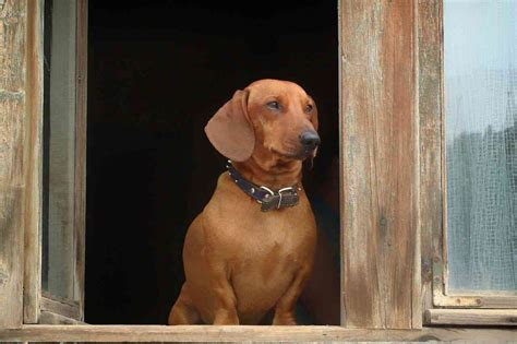 hund alleine zuhause hund alleine zuhause lassen rat hund tat