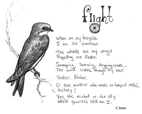 poem sketches tree swallow sketch and poem let s paint nature