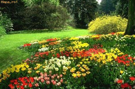 imagenes flores de jardin el jardin con flores fotos comicas flores funpub net