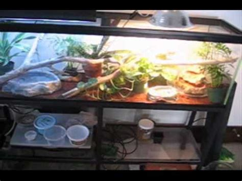 chinese water dragon care part  youtube