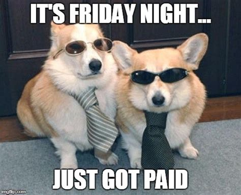Friday Dog Meme - cute dogs imgflip