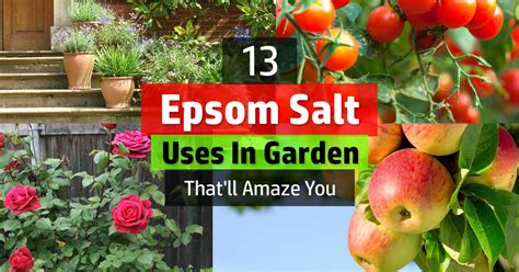 epsom salt for gardening epsom salt fertilizer for