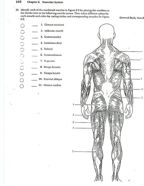 anatomy coloring book app anatomy coloring pages muscles human anatomy diagram