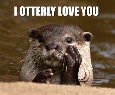 Otter Love Meme - while river otters spend most of their time in