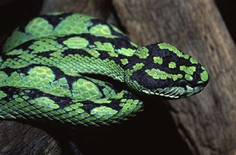 green and black viper and i think to myself what a wonderful world july 2012