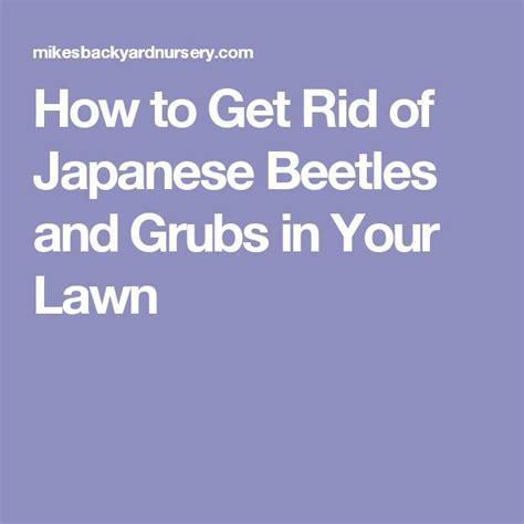 1000 ideas about japanese beetles on pinterest killing