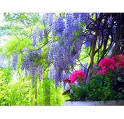 Latest Natural Beauty HD Widescreen Wallpapers 2012 2013