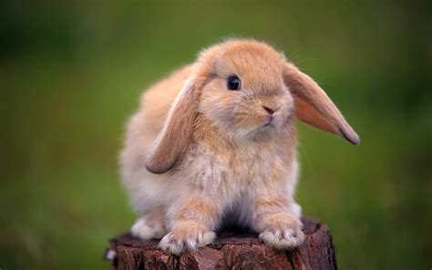 cool animals pictures  rabbit wallpapers funny  cute