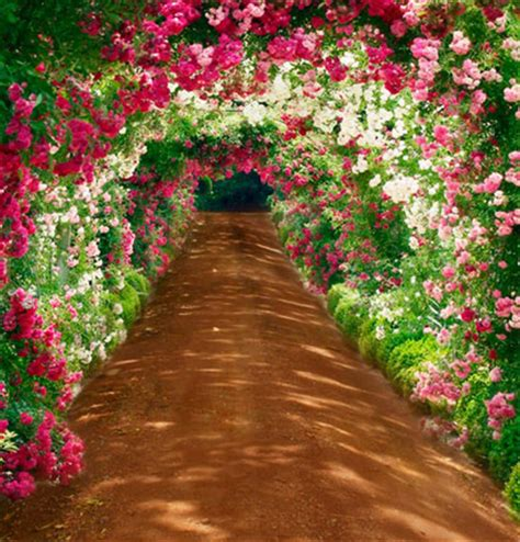 Wedding Gate Background by Buy Wholesale Outdoor Weddings From China