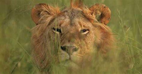 best safari tour operators the best safari tour operators in kenya marsha