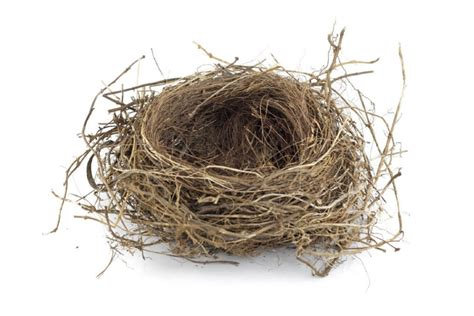 bird nesting offers divorcing parents a means of