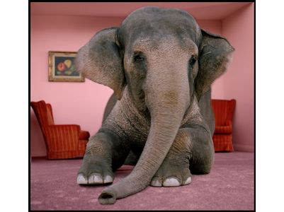 an elephant in the room 301 moved permanently