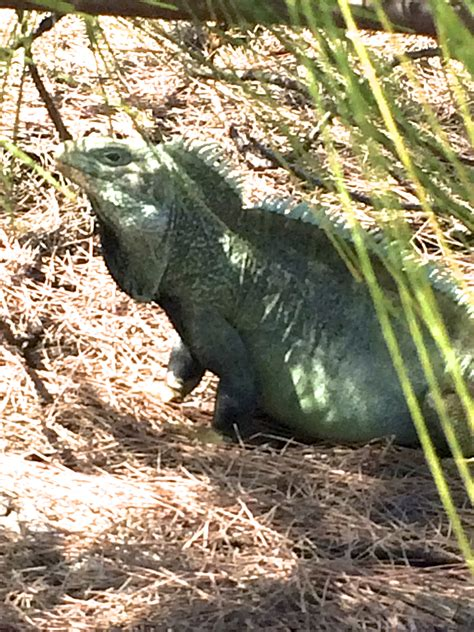 iguana island should you splurge on an excursion traveling with kids