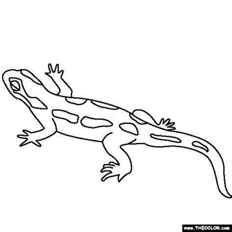 tiger salamander coloring page tiger salamander coloring page