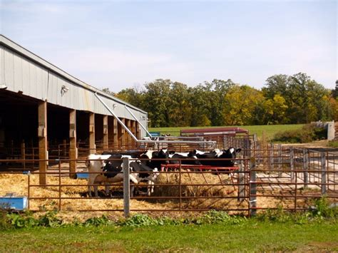 Small Barns by Facilities For Ontario Beef Cattle Canadian Cattlemen