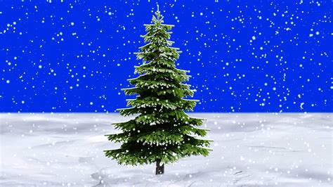 o tree in snow falling slowly in front of pine tree blue screen