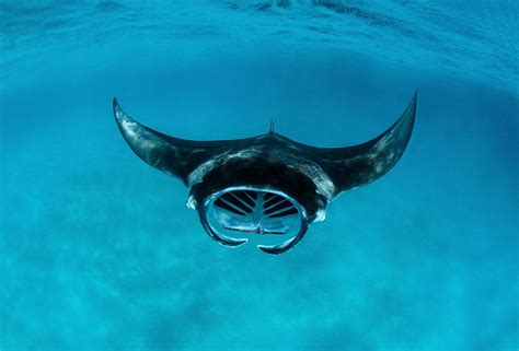 best places in the world for snorkeling 10 best places to snorkel in the world