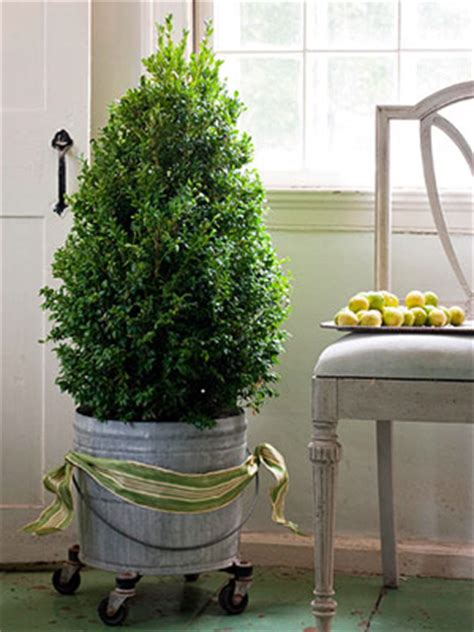 small cheap trees great ideas for small trees my desired home
