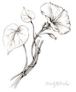 flowers gallery full botanical artist amp illustrator