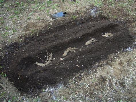 Spargel Selber Anbauen 4390 spargel selber anbauen spargel selber anbauen kochrezepte