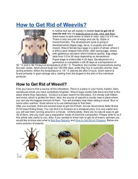 How To Get Rid Of Weevils In The Pantry by How To Get Rid Of Weevils