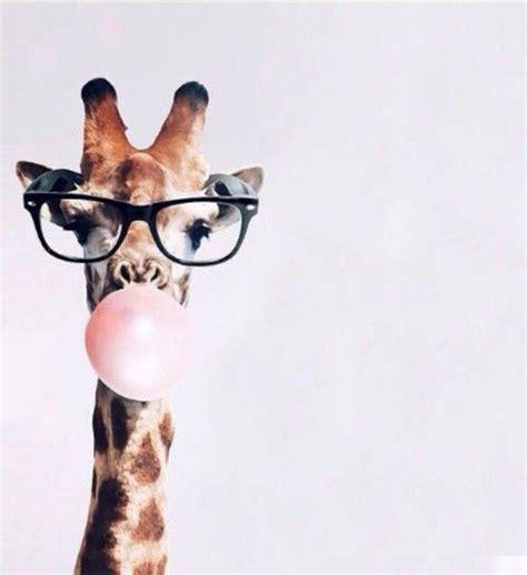 imagenes de batman hipster las 25 mejores ideas sobre fondos tumblr hipster en