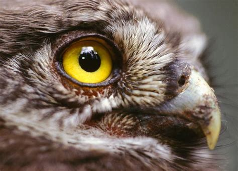 bird eyesight not so keen after all animals pets