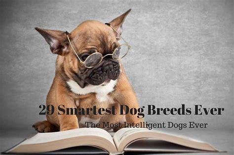smartest small breeds smartest breed rankings breed dogs spinningpetsyarn