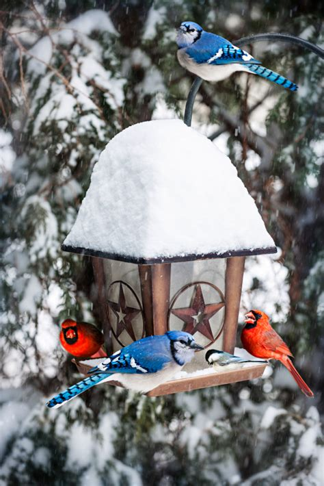 how to attract birds to your backyard how to attract birds to your yard blain s farm fleet blog