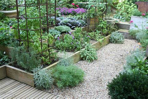kitchen gardens design getting a small kitchen garden started the micro gardener