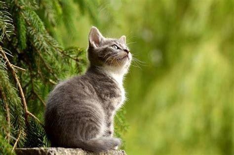 Kaos Kaki Hewan Peliharaan Anjing Kucing Lucu 1 50 fakta paling unik dan menarik tentang kucing setangkai