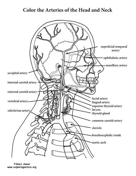 Color Atlas Of Head And Neck Anatomy Pdf Books