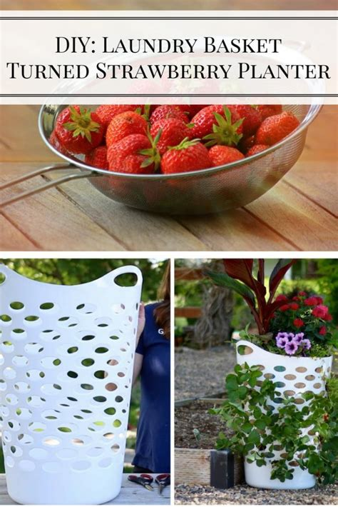 strawberry planter ideas laundry basket turned strawberry planter home and