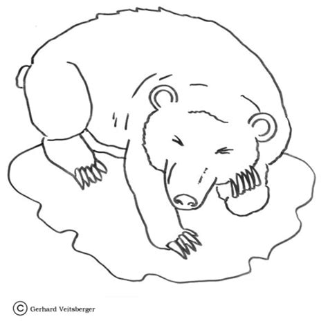 bear hibernating coloring new calendar template site