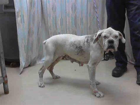 houston pound 408 best images about pets without parents on theater adoption and animal