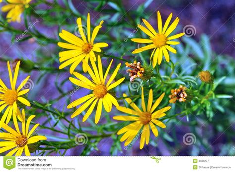 wildflowers that bloom in the fall wildflowers royalty free stock photography image 3335277