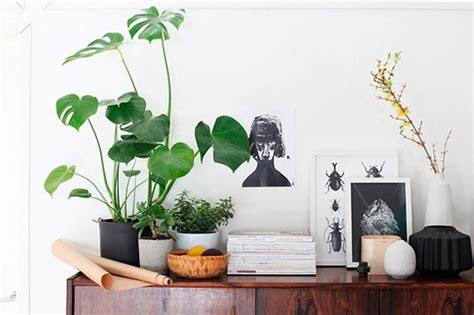 plants home decor 9 jpg inspiration decorating with indoor plants checks and spots