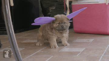 sad puppy gif sad gif find on giphy