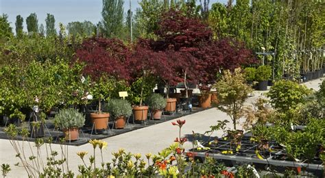 piante giardino piante da giardino