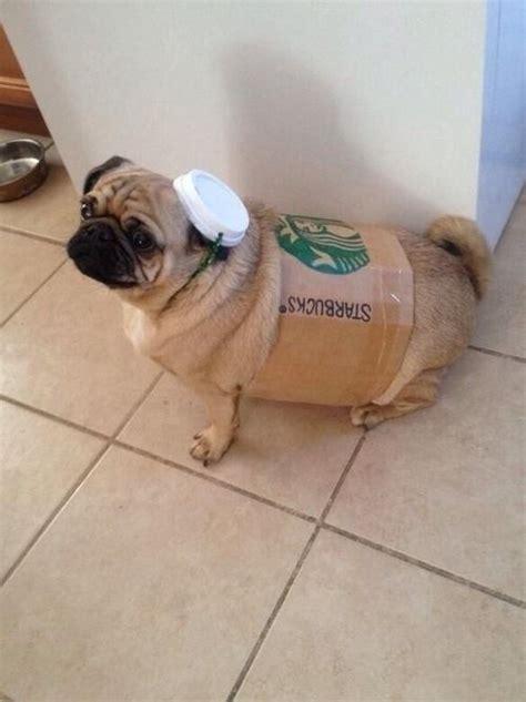 starbucks puppy cup starbucks cup costume