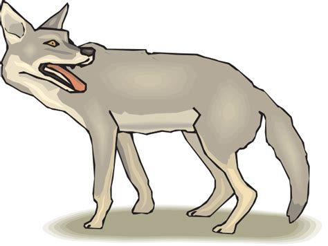 coyote clipart free coyote clipart