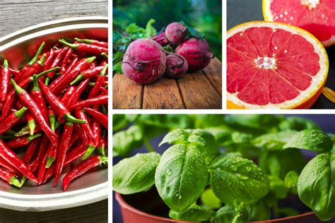 The Cardinal Detoxes by Detox Your Blood With These 20 Superfoods Gympik