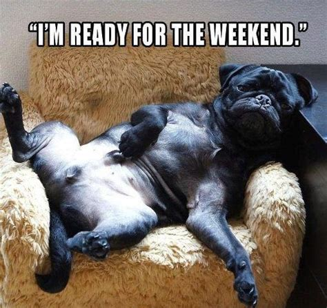 Weekend Dog Meme - funny archives page 4 of 18 pug meme funny cute pugs
