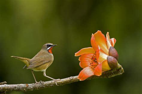 wallpaper flower bird bird and flower wallpaper hd