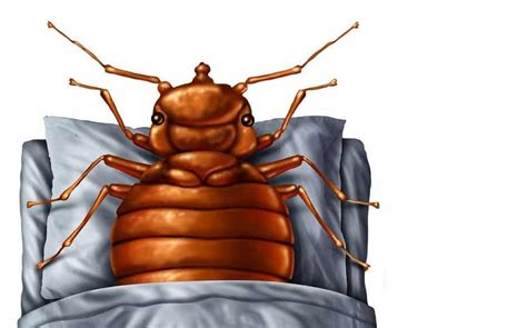 bed bug bites itch  remedies    house home remedies natural herbal cures