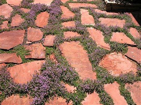 flagstone patio ground cover filler patio ideas